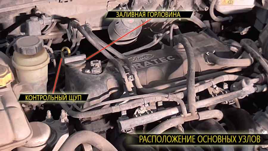 Расположение масляного щупа и заливной горловины на двигателе о Фокус 1